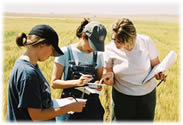 Students identifying weed seeds found in a wheat field